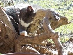 gatto-che-riposa.jpg