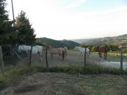 passeggiate-con-cavalli-monferrato.jpg