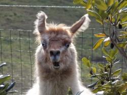 12passeggiate-con-animali-acqui-terme-monferrato