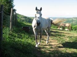 15passeggiate-con-animali-acqui-terme-monferrato