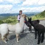 La natura come cibo e medicina - con Lama ed Alpaca sulle traccie del miele in collaborazione con Cascina Tiole, Pian Castagna