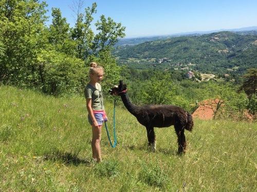 Camminate con lama e alpaca, bambini e ragazzi Acqui terme, colline Monferrato