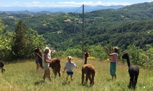 camminate-con-lama-alpaca-colline-monferrato-bambini