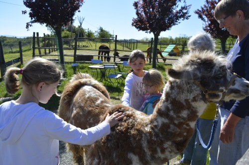 festa di compleanno con lama e alpaca Acqui Terme