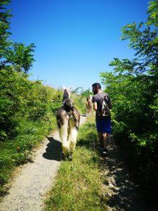 Persone che camminano con i lama Monferrato